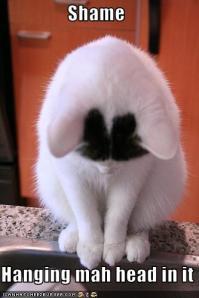 When isn't a cat photo amusing?