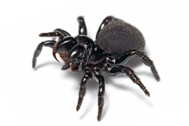 Except when it comes to spiders...I am very willing to be rescued from them....so what if it's cliched?!