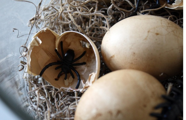Or eggs with spiders! that would be TERRIFYING!